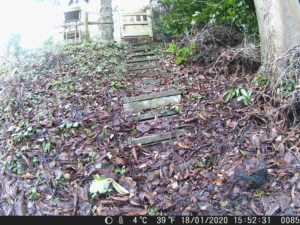 A blackbird recorded by the wildlife camera