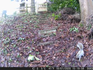 A squirrel recorded by the wildlife camera
